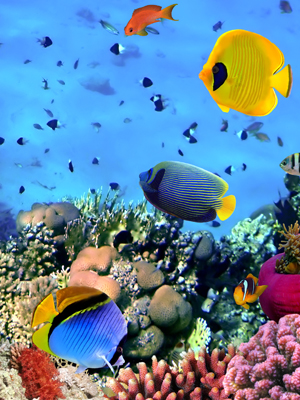 Wallpaper Coral reefs